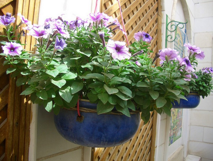 Best Vertical Gardening Ideas That Are Easy To Achieve AND Look Great!