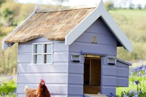 Chicken Roosting Coops Ideas