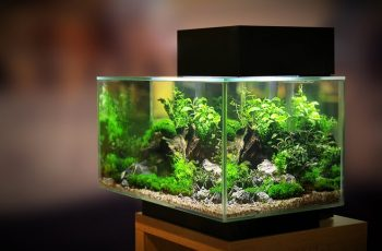 How to Set Up an Aquarium for Beginner | Aquarium Ideas Decoration